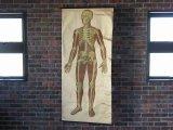 VINTAGE MEDICAL CHART ヴィンテージ メディカルチャート 人体図 解剖図 スカル ドクロ