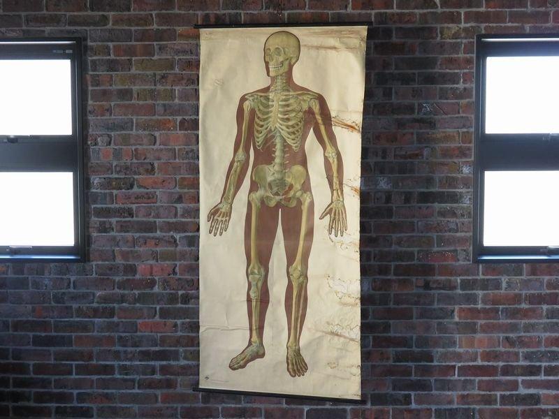 画像1: VINTAGE MEDICAL CHART ヴィンテージ メディカルチャート 人体図 解剖図 スカル ドクロ